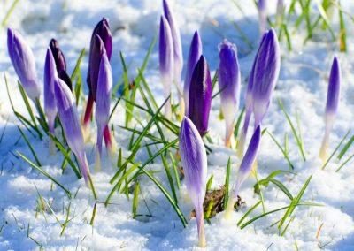 Primavera Del Espíritu: Весна Духа