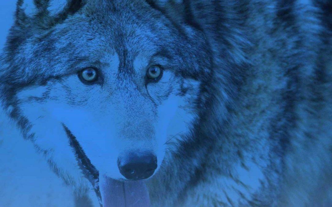 Тенсегрити Волка: мудрость и любовь