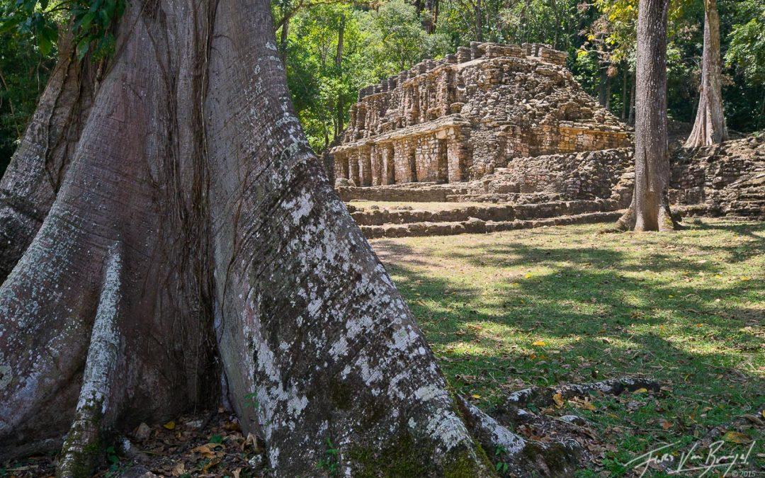 Священное дерево Сейба. Продолжение