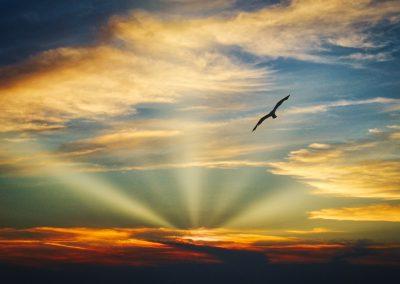 Летать На Крыльях Привязанности. Женщина-Нагваль Кэрол Тиггс