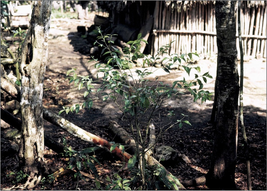 Деревенский Шаманизм Индейцев Майя В Юкатане. 2 Часть 20