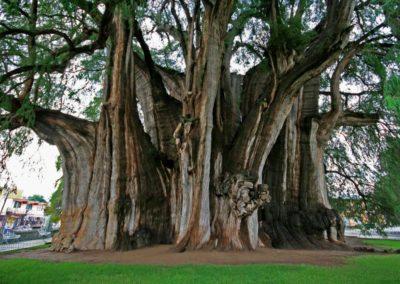 Деревья – Безмолвные Друзья Практикующих