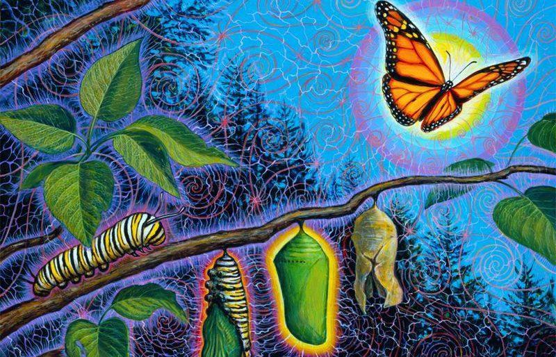Трансформация в бабочку